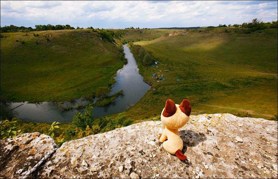 Приключения котёнка Гав в Липецкой области